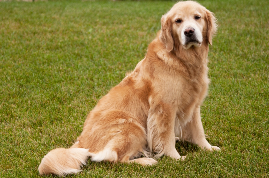 Image result for senior dogs free stock image