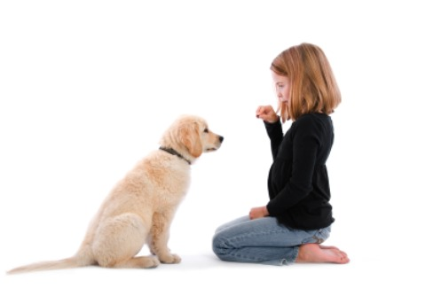 How To Teach Your Dog To Sit Meditnor
