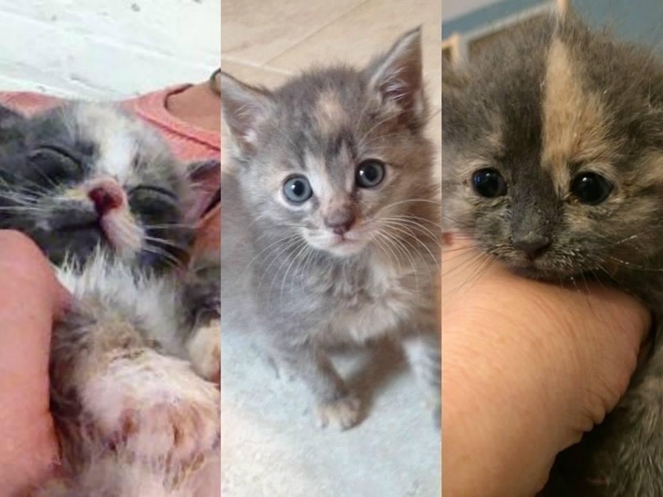 carf-kittens