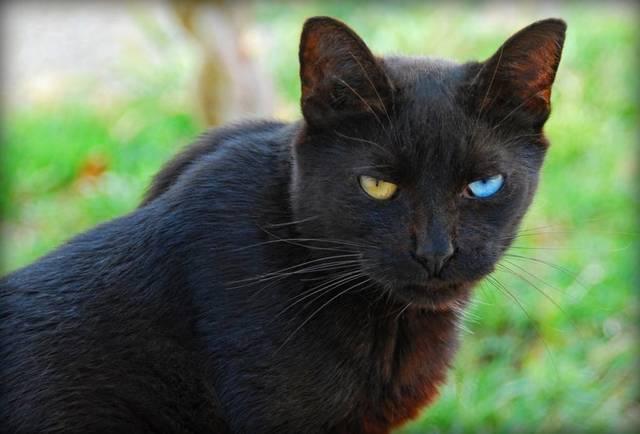 black-cat7