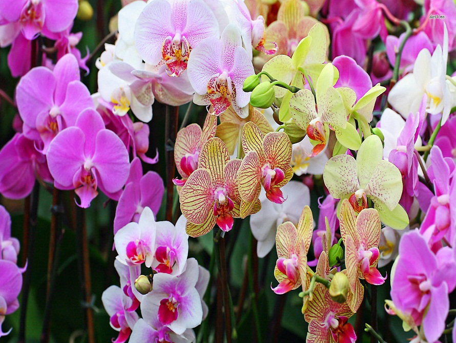Take care of Orchid Flower